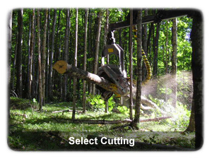 Select Cutting