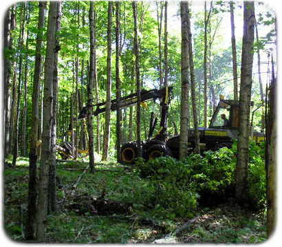 logging timber